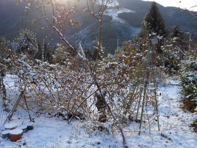 年末の積雪。1