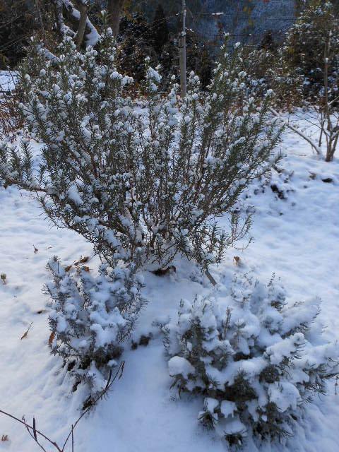 年末の積雪。2