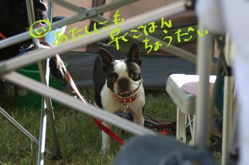 2011-7 キャンプ-099