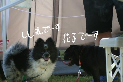2011-7 キャンプ-112