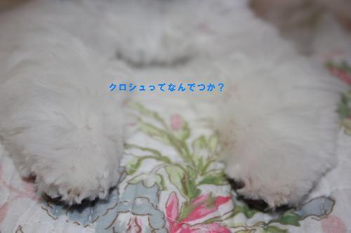 IMG_0063_convert_20110807171219.jpg