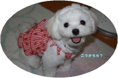 IMG_0094_convert_20110810220205.jpg