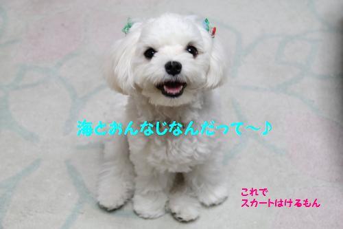 IMG_1129_convert_20111109101426_20111111144446.jpg