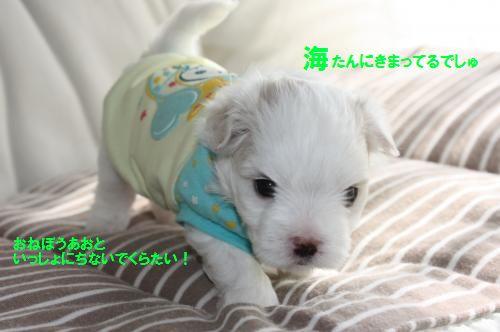 IMG_8181_convert_20110329163536_20110402141235.jpg