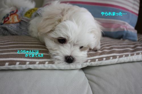 IMG_8627_convert_20110504132249.jpg