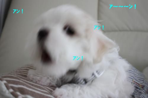 IMG_8663_convert_20110504134650.jpg