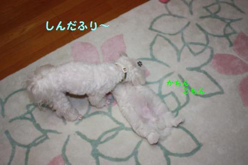 IMG_8996_convert_20110519183822.jpg