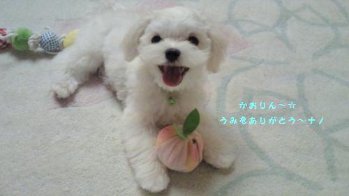 NEC_0065_convert_20110625114555.jpg