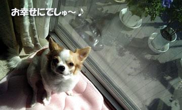 お幸せに~!