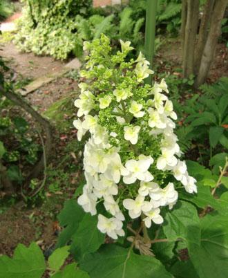 kasiwabaazisai2011-6.jpg
