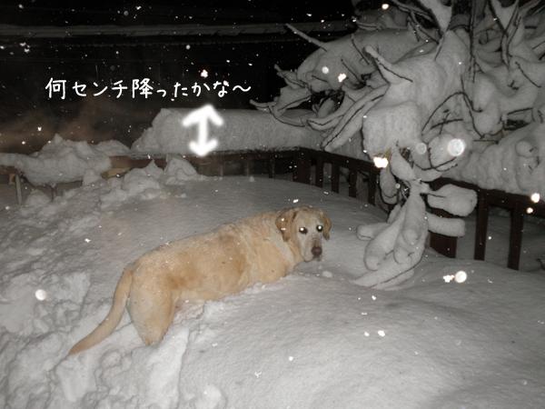 baruyuki.jpg