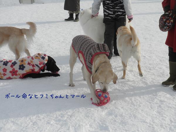 hihumimaru_20140120200700c11.jpg
