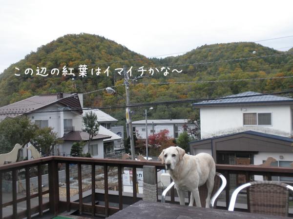 kouyou_20131020205511105.jpg