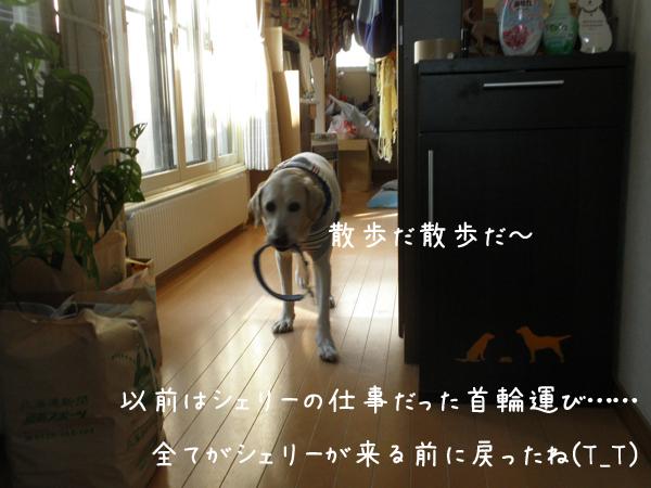 marukubiwa_20131106214025cf3.jpg