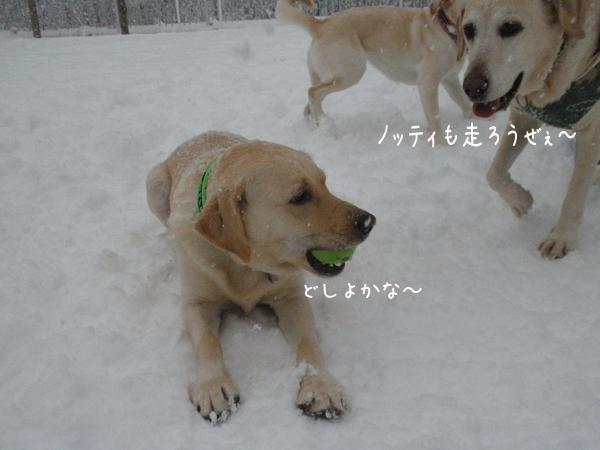 marunotei_20131217224255b19.jpg