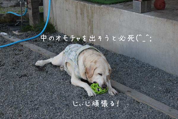 maruomotya_2013101202070530b.jpg