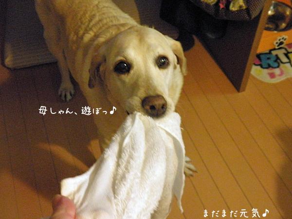 marutaoru_20131206213911f44.jpg