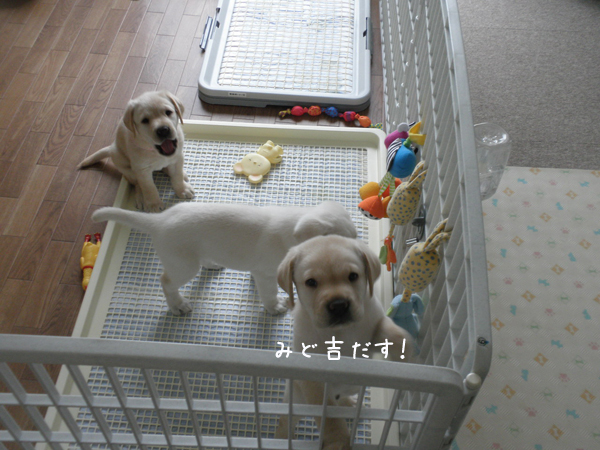 midori_20130815133150cca.jpg
