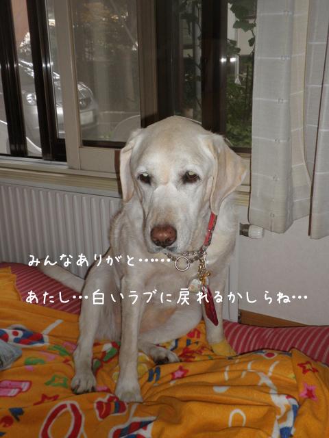 omamori2_201308222225470da.jpg