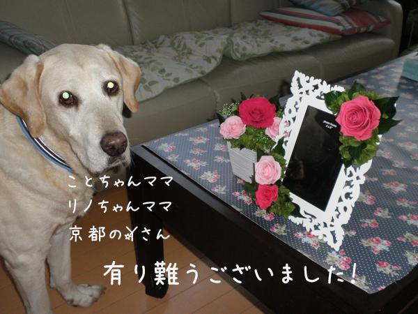 phot2.jpg