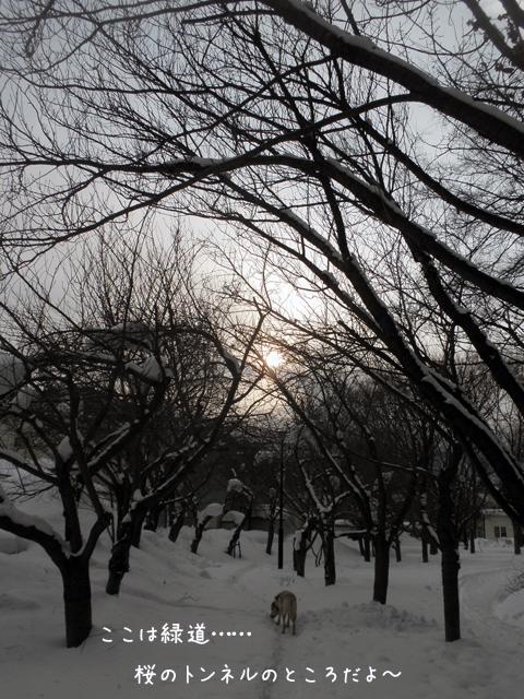 ryokudou_20140202204721a9d.jpg