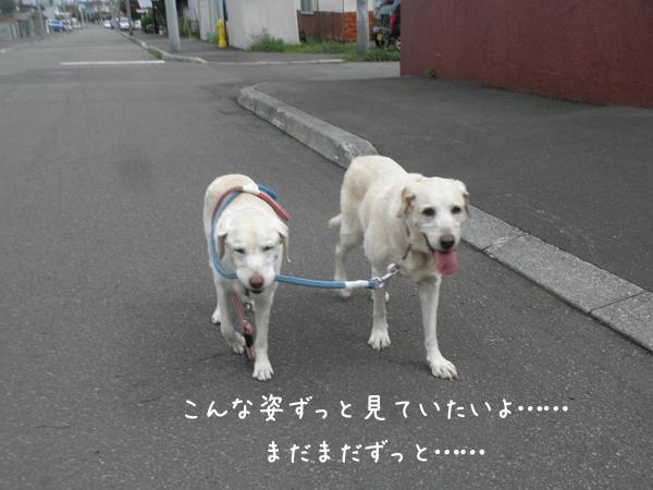 sanpo2_20130831223842202.jpg