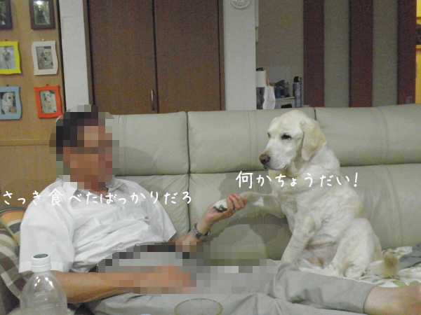 sofa_201309042323461f4.jpg