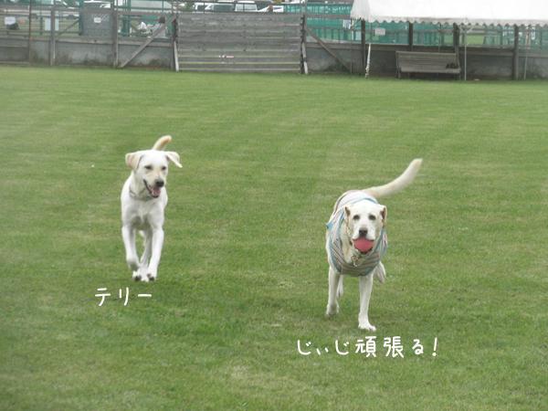 terimaru_20131012104912584.jpg