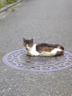 野良猫20110525