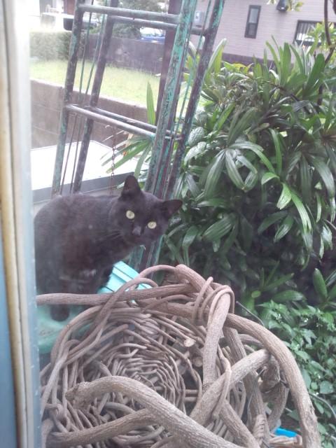 DSC_0063黒猫ちゃん
