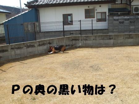 何かいる・・・
