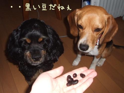 黒豆ですからぁ。