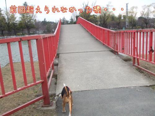 橋の端を歩く犬