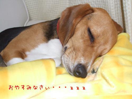 かわぃぃ寝顔♪