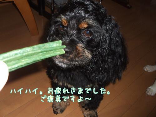 ガムンチョ食べるかい?