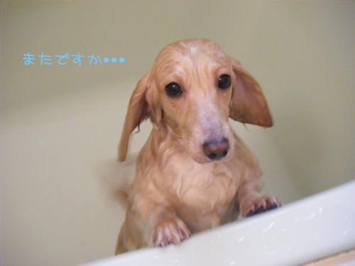薬浴中~♪