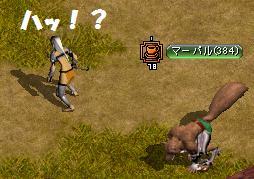 野犬狩り?2