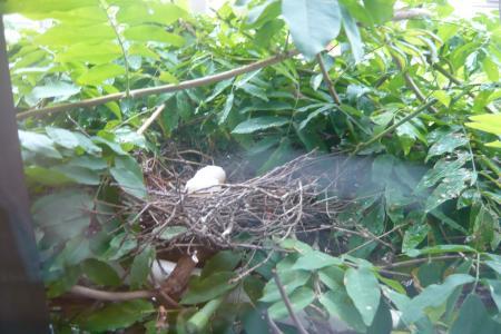 鳩101009卵