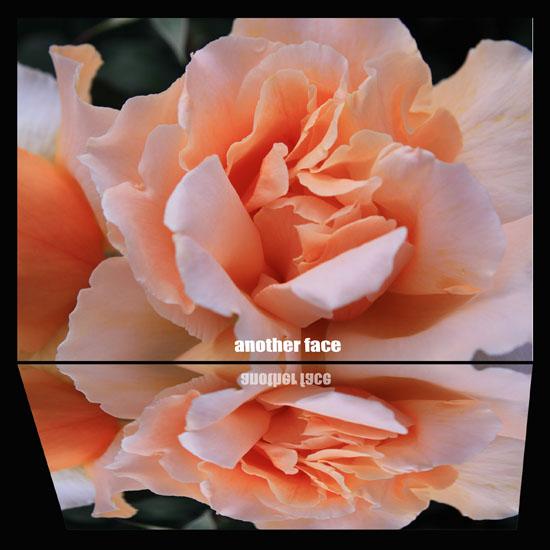 0512-Rose1.jpg