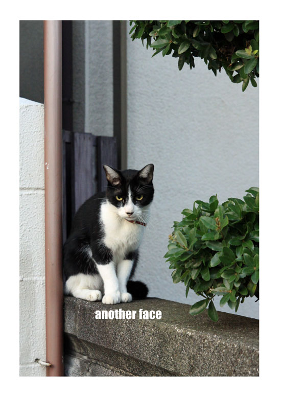 0911-cat1.jpg