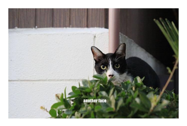0911-cat2.jpg