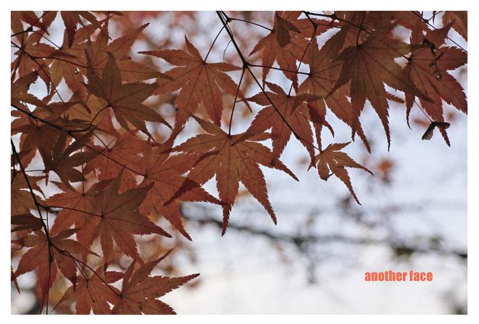 1129-Nanzenji3.jpg