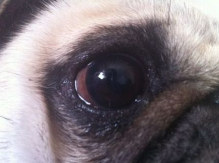 角膜潰瘍2