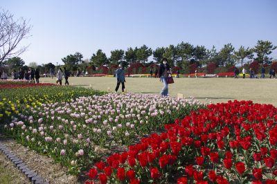 吉田公園7