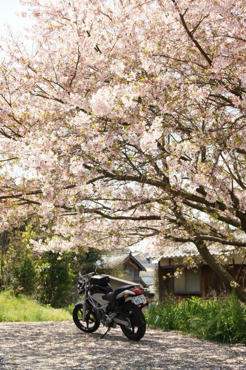 春の訪れの下で
