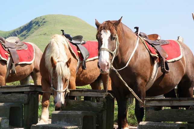 草千里で乗れる馬ちゃん達