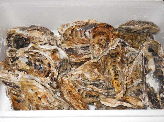 芭露牡蠣 (1)