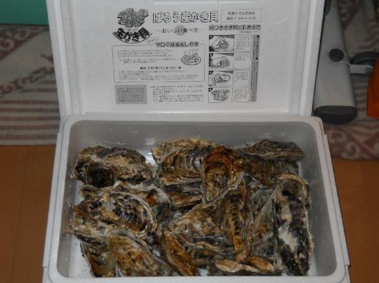 芭露牡蠣 (2)