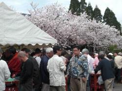 桜の下さくさんの人人