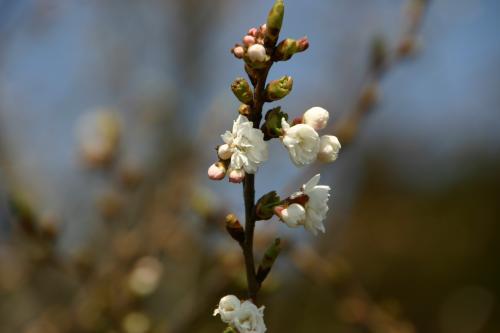 白い花 3